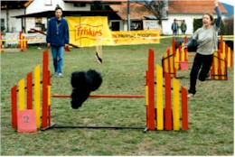 Vedette jumping