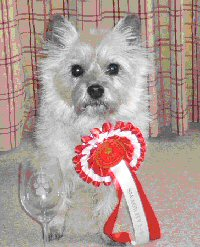 Milly with her 1st Class Rosette in March 2013