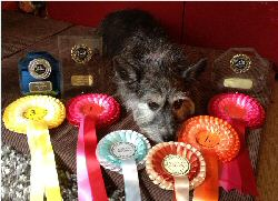 Widget with her rosettes and the knowledge she is now Grade 5