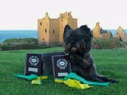 Rhum looking very regal with his rosettes and trophies