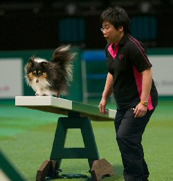 Sizzle at Crufts