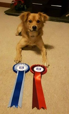 Chip with his rosettes
