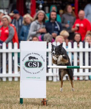 59d1c701 The Kennel Club International Agility Festival took place at Rockingham  Castle over the weekend of ...