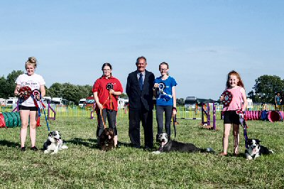 6b4e99b0 If a dog wins a Champion Certificate or Reserve Championship Certificate  under Kennel Club rules the owner/handler may apply to the UK Agility  office for ...